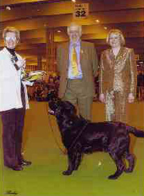 Judging at Crufts